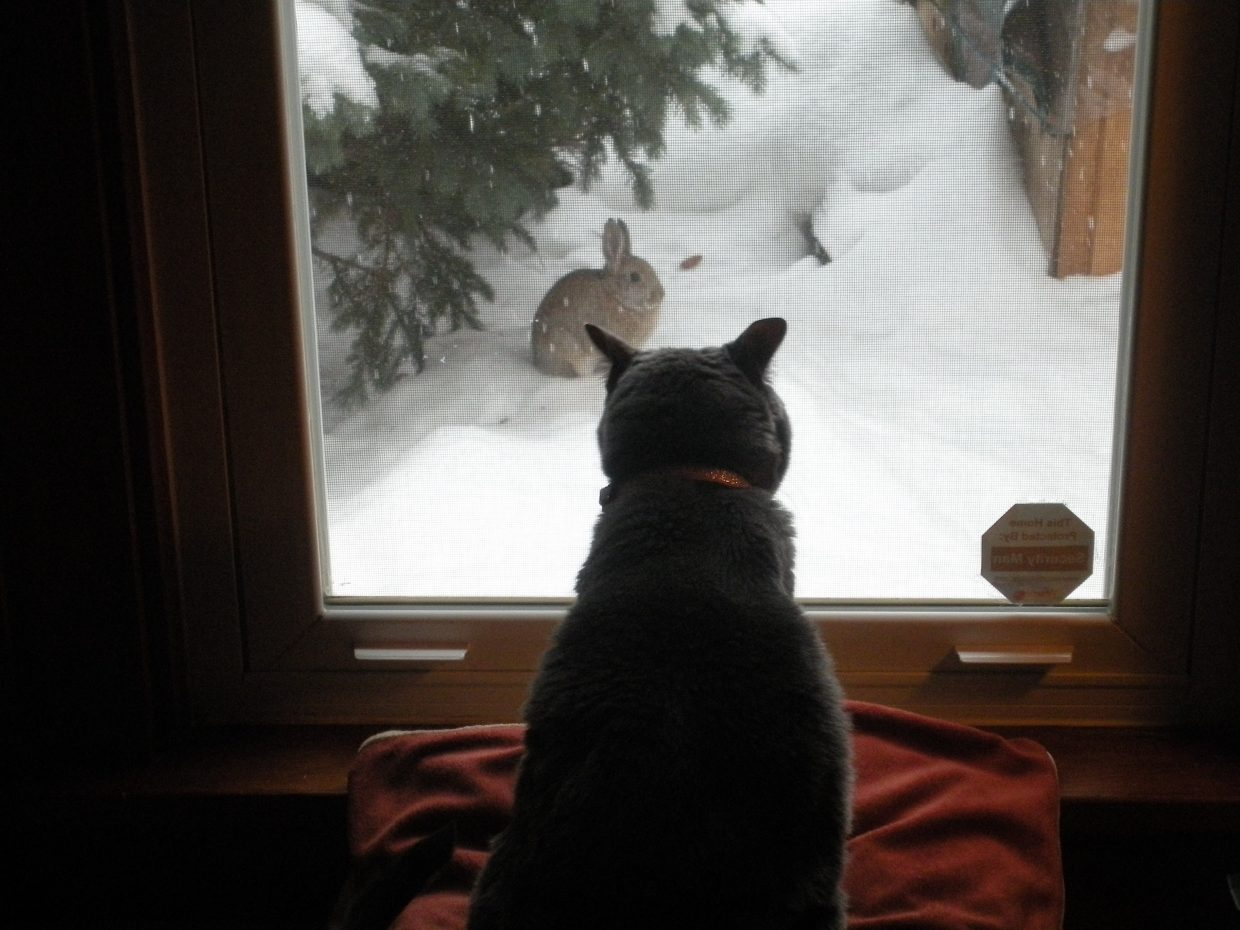 Toppy watching her buddy we fed 4th winter in a row. It was her last time since we had to put her down last week. Submitted by Don Asta.