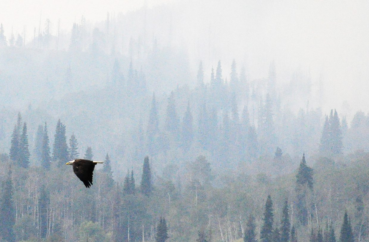 A bald eagle flies in front of the Deep Creek fire over the summer after fishing in a pond at Wolf Mountain Ranch.