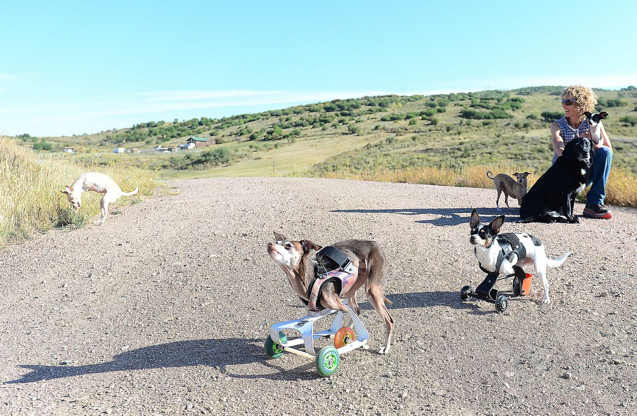 Melissa Uchitelle-Rogers watches over the pack during an outing near the families home  just South of Oak Creek. Ken Rogers, and Melissa, have five dos and two cats with disabilities, and an older black lad that is a bit of an odd ball in the house because she has the use of all four legs.