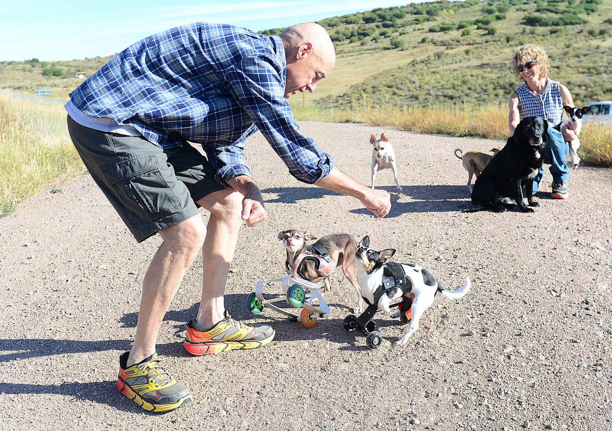 Ken Rogers, and  Melissa Uchitelle-Rogers, take their pack of dogs  out for an outing near their home just south of Oak Creek.