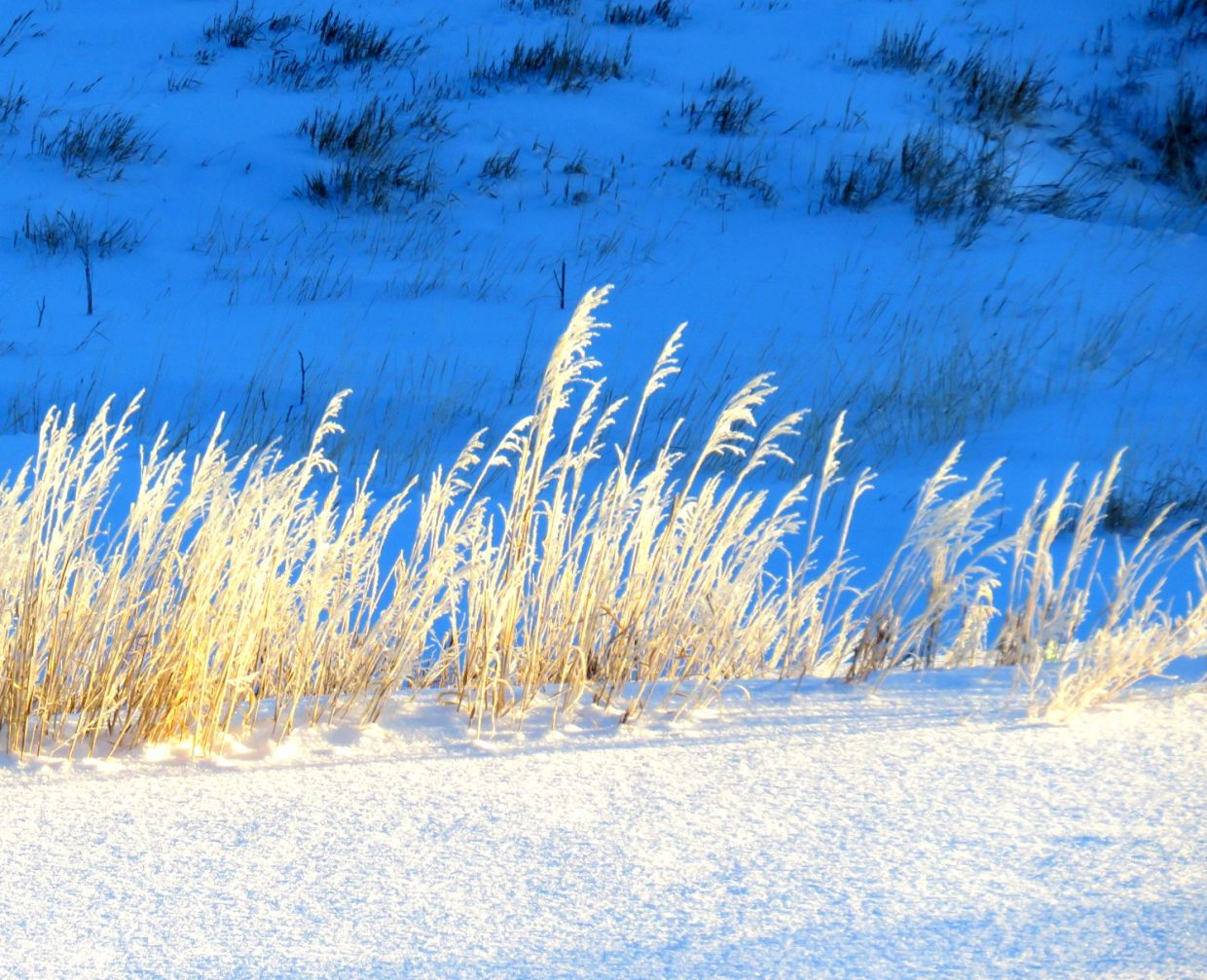 Sun catches dry grass, painting it gold.