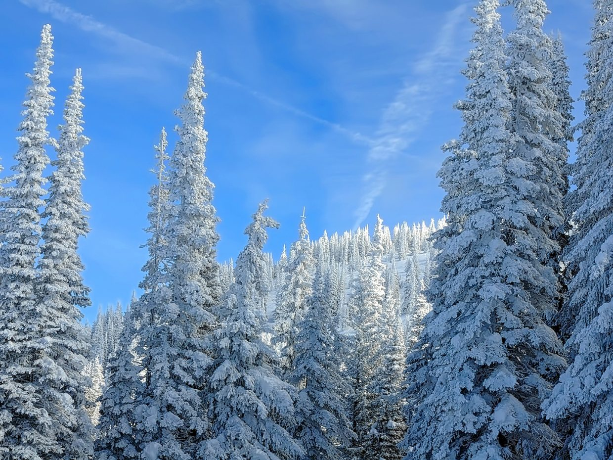 Trees are covered in snow on Flying Z at Storm Peak at Steamboat Resort.
