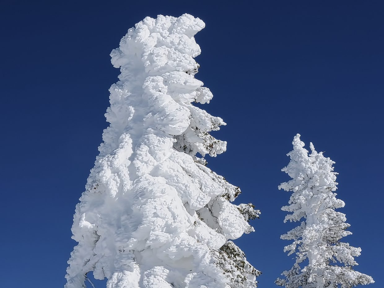Snow coats trees at the top of Storm Peak at Steamboat Resort.