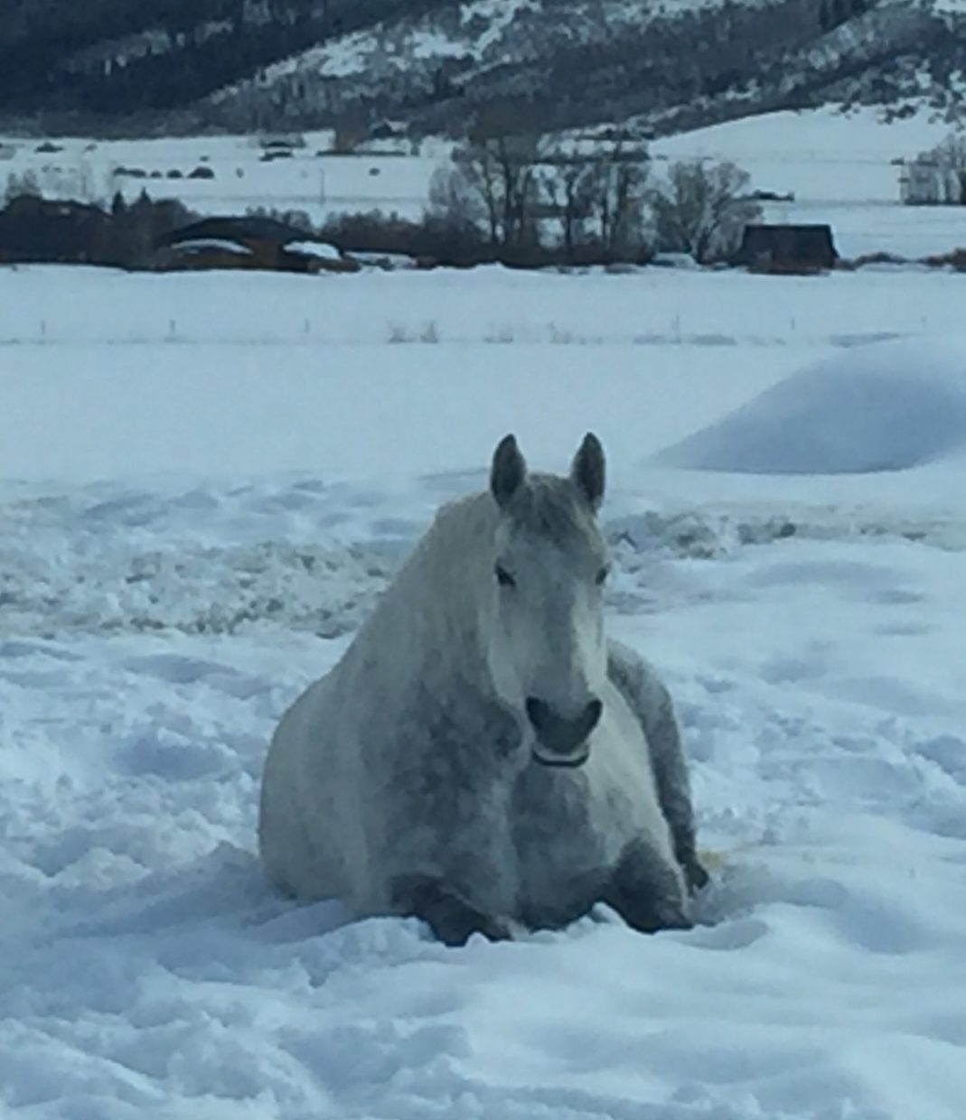 Barrett Moore, age 7 while visiting Grandpa, captured this photo of a beautiful horse resting!