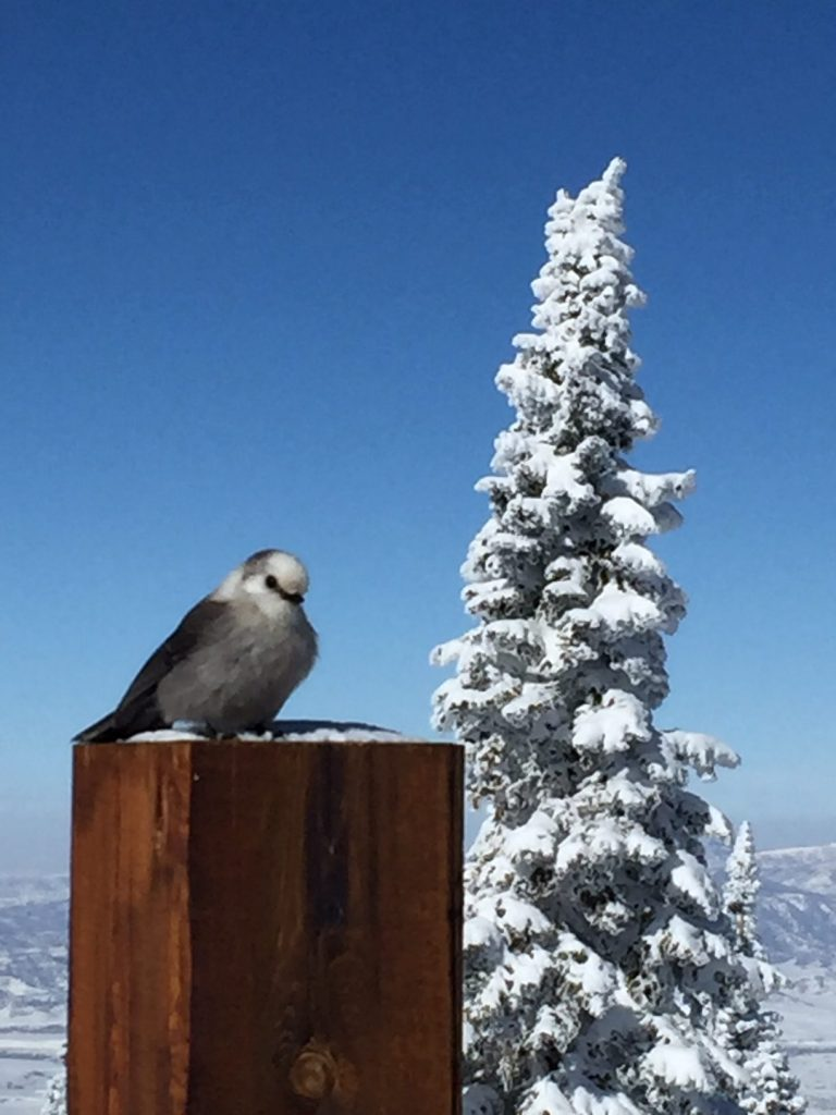 A bird sits on a post at Steamboat Resort.