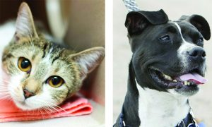 Routt County adoptable pets: Louise the cat and LoLo the dog