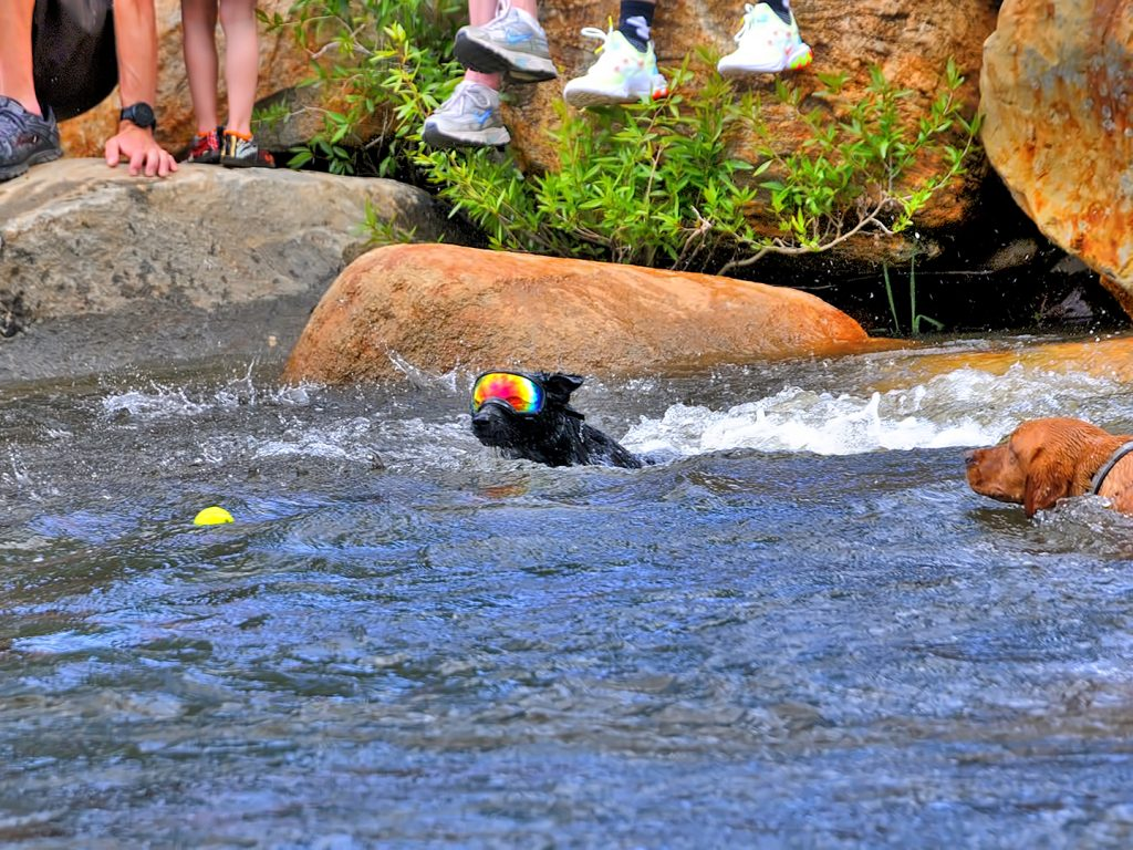River dogs at 2019 Yampa River Festival