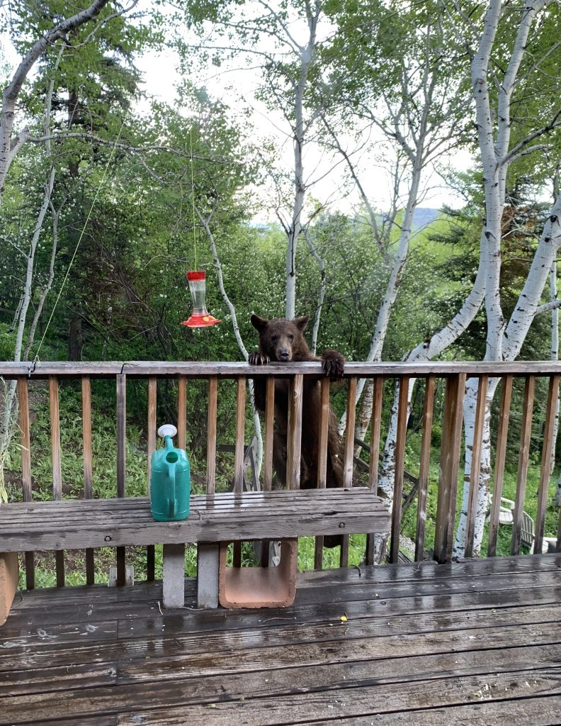 A bear attempts to climb a deck, possibly to get ahold of some hummingbird feed.