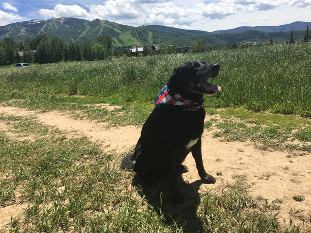 A dog enjoys a hike in its American flag bandana for the Fourth of July.