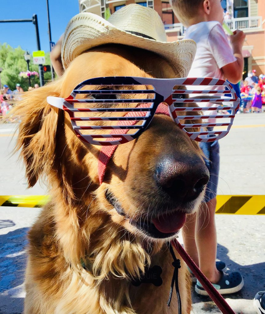 A dog gets festive during the Fourth of July Parade in downtown Steamboat Springs.