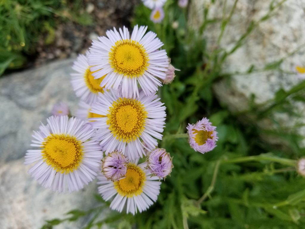 Flowers bloom at the Yampa River Botanic Park.
