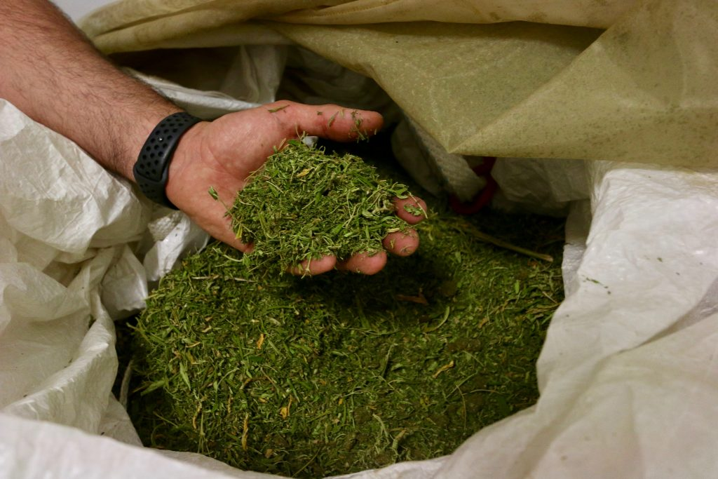 The 'hemp gold rush': A look at the Routt County businesses