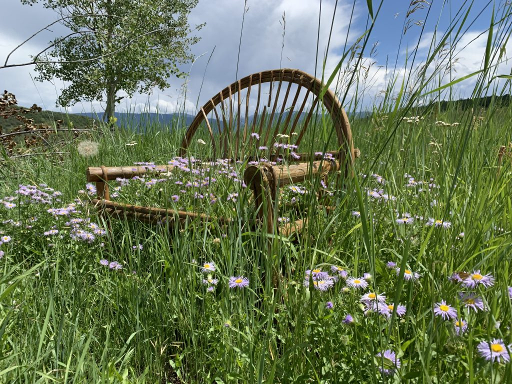 Discarded bench becomes a wildflower trellis.