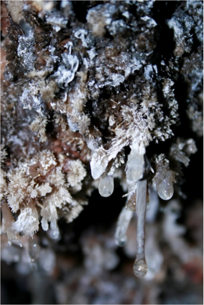 Steamboat's toxic cave is home to weird worms, crystal